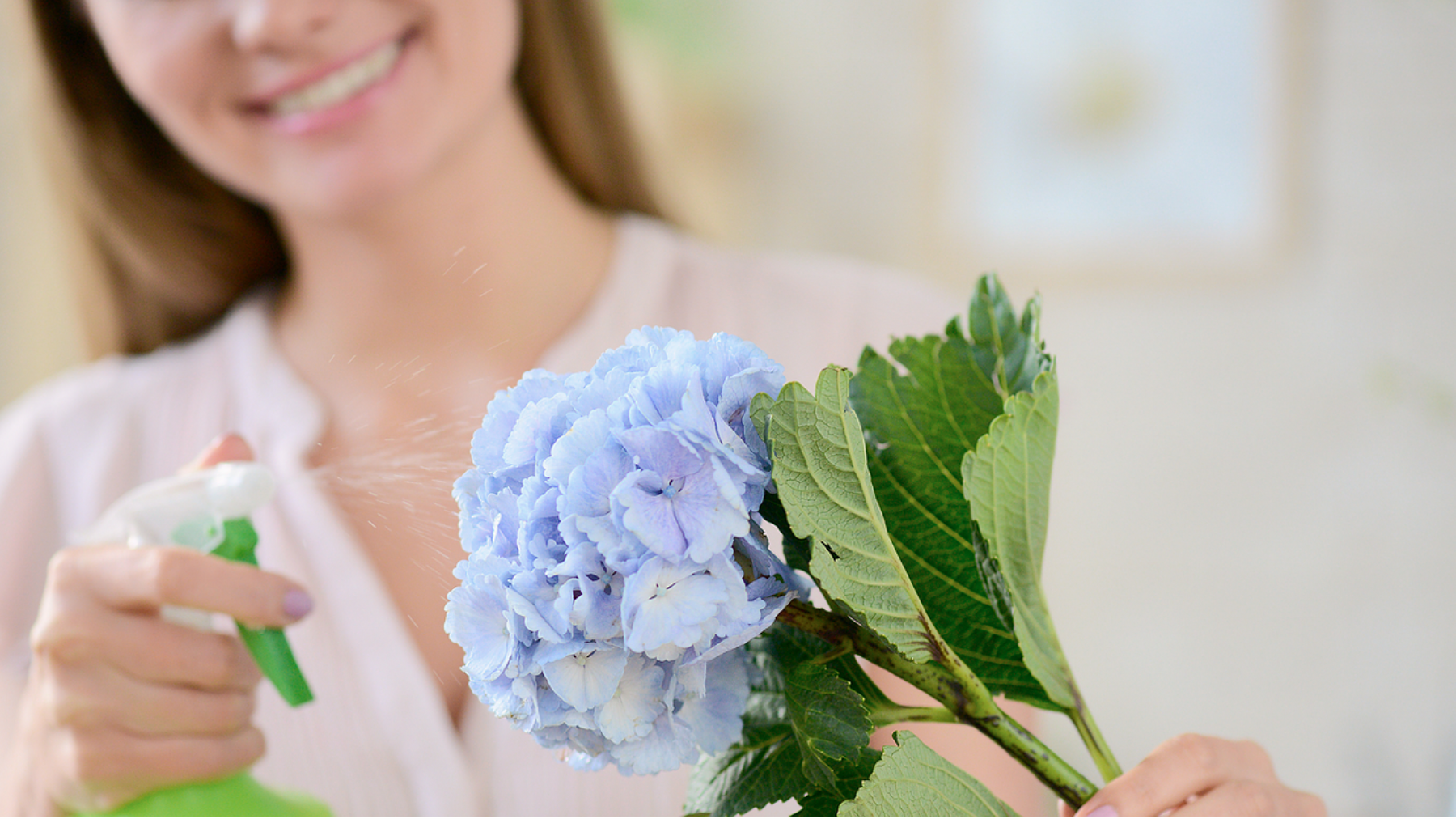 8 Essential Flower Care Tips