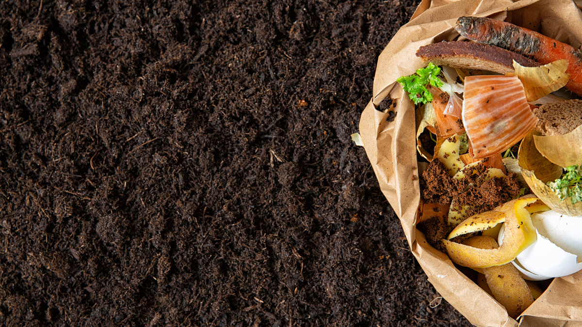 Let's get sustainable - Composting