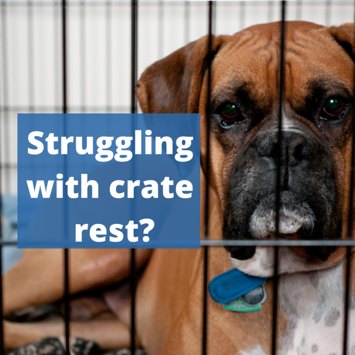 What To Do If Your Dog is Struggling with Crate Rest