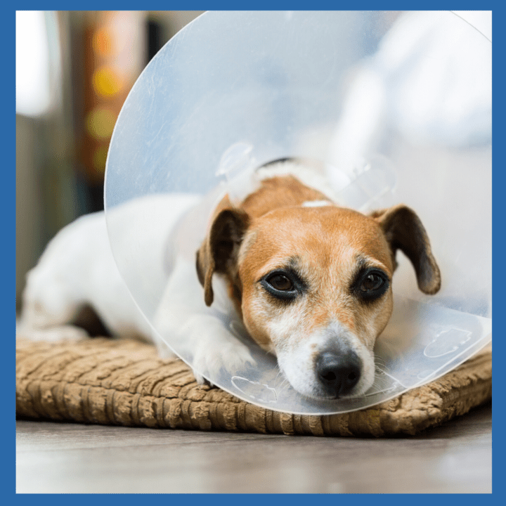 Common Conditions In Dogs That Require Crate Rest