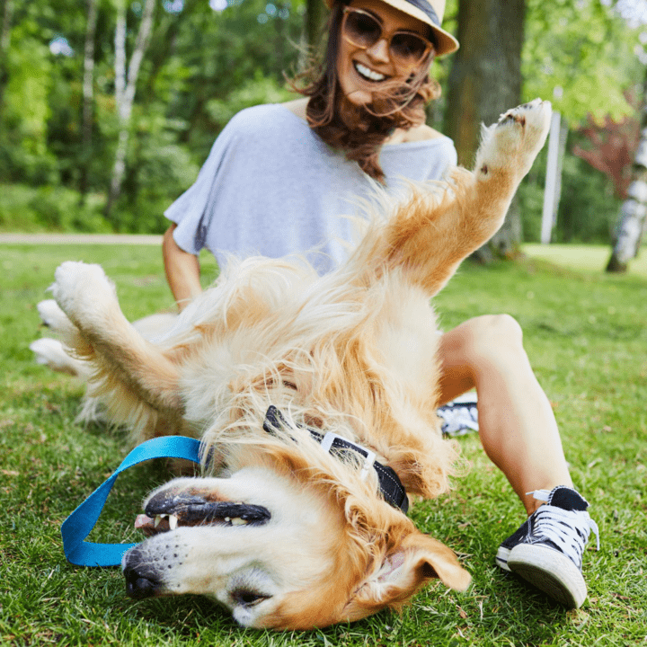 Playing with your dog - 5 Games for a brilliant bond!