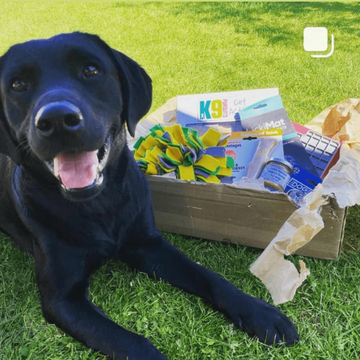 The Canine Brain Box subscription box for dogs!