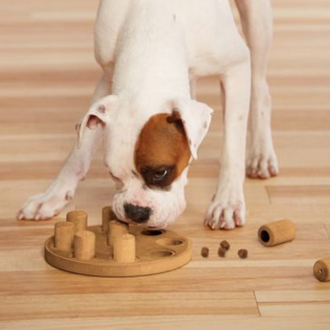 Getting the most out of your dogs puzzle toys
