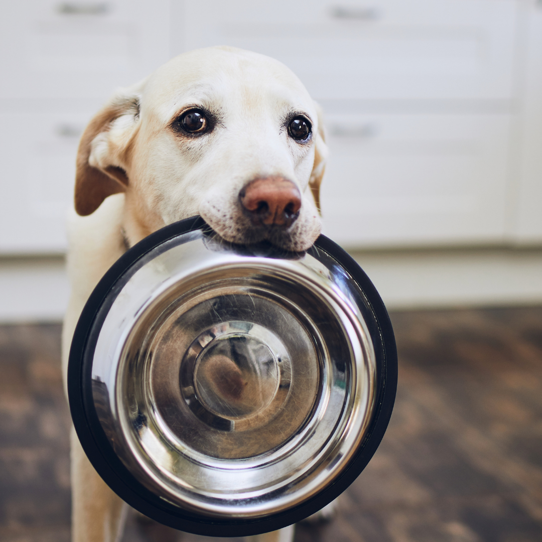 'Rawgust' - Choosing the best food for your dog.