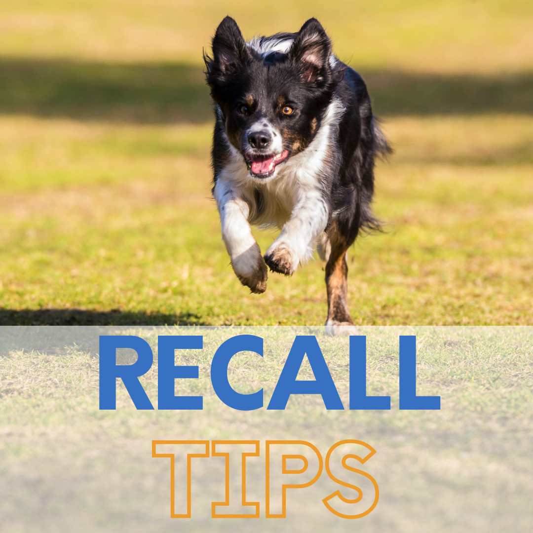 Boosting your dogs recall training