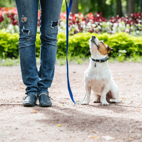 training activities for dogs