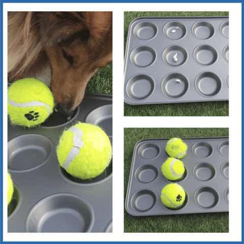 The muffin tin enrichment activity for dogs