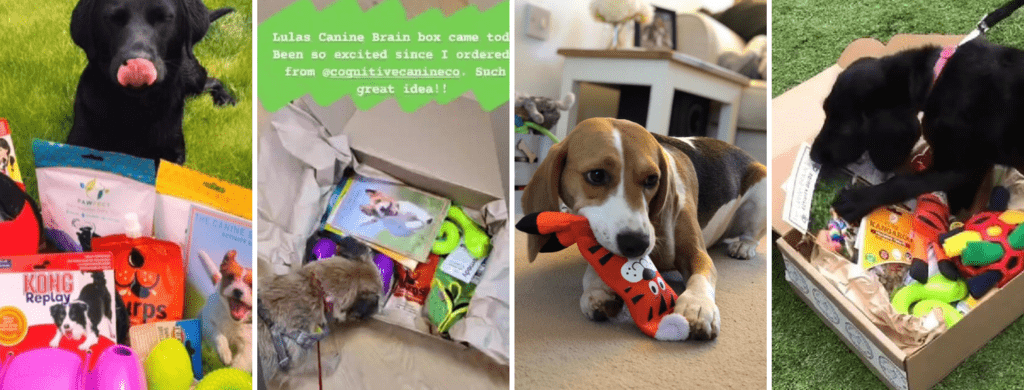 the canine brain box enrichment subscription box for dogs previous months