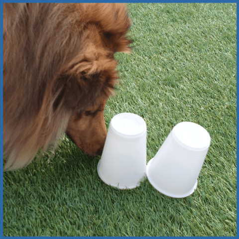 Which Cup? Enrichment game for dogs