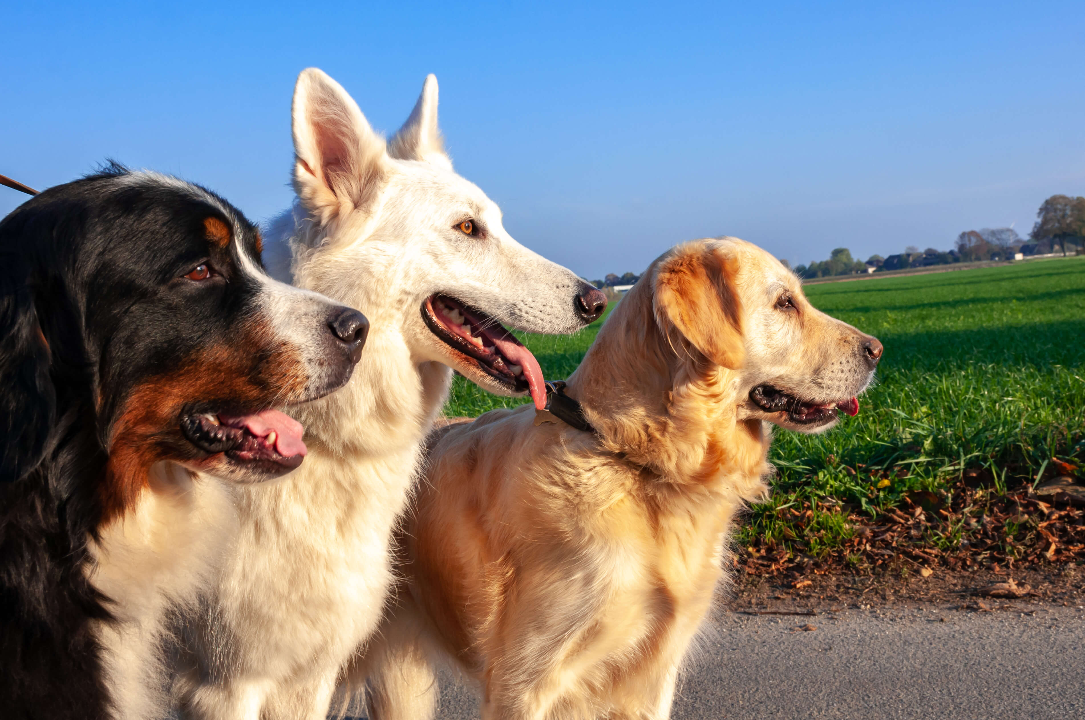 Biologically Appropriate Diet for Dogs: What is it and what are the benefits?