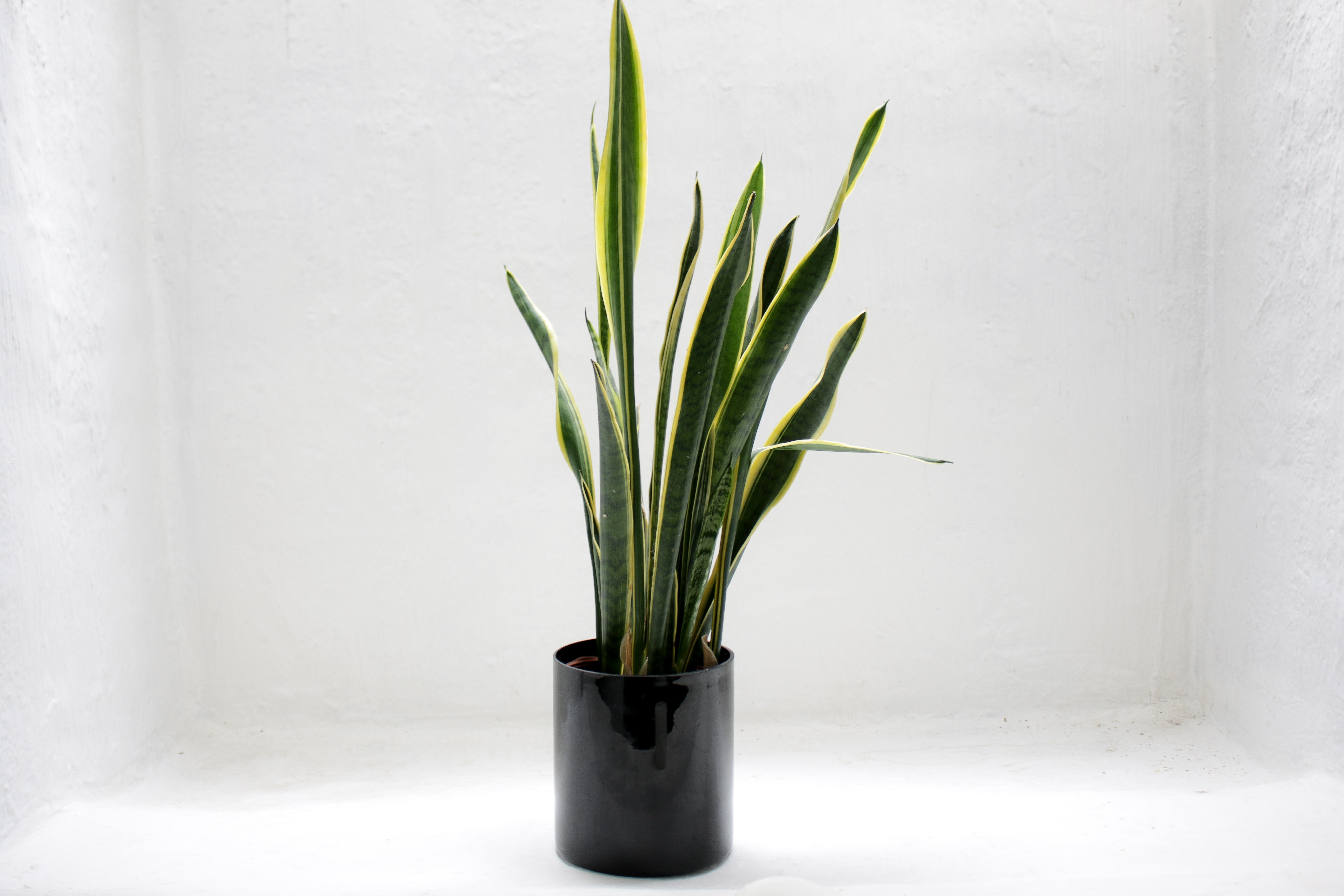 The Perfect Plant for Brown Thumbs