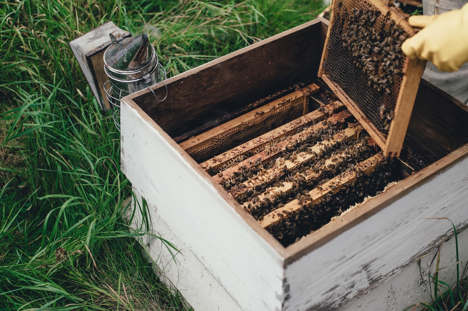 Beewashing