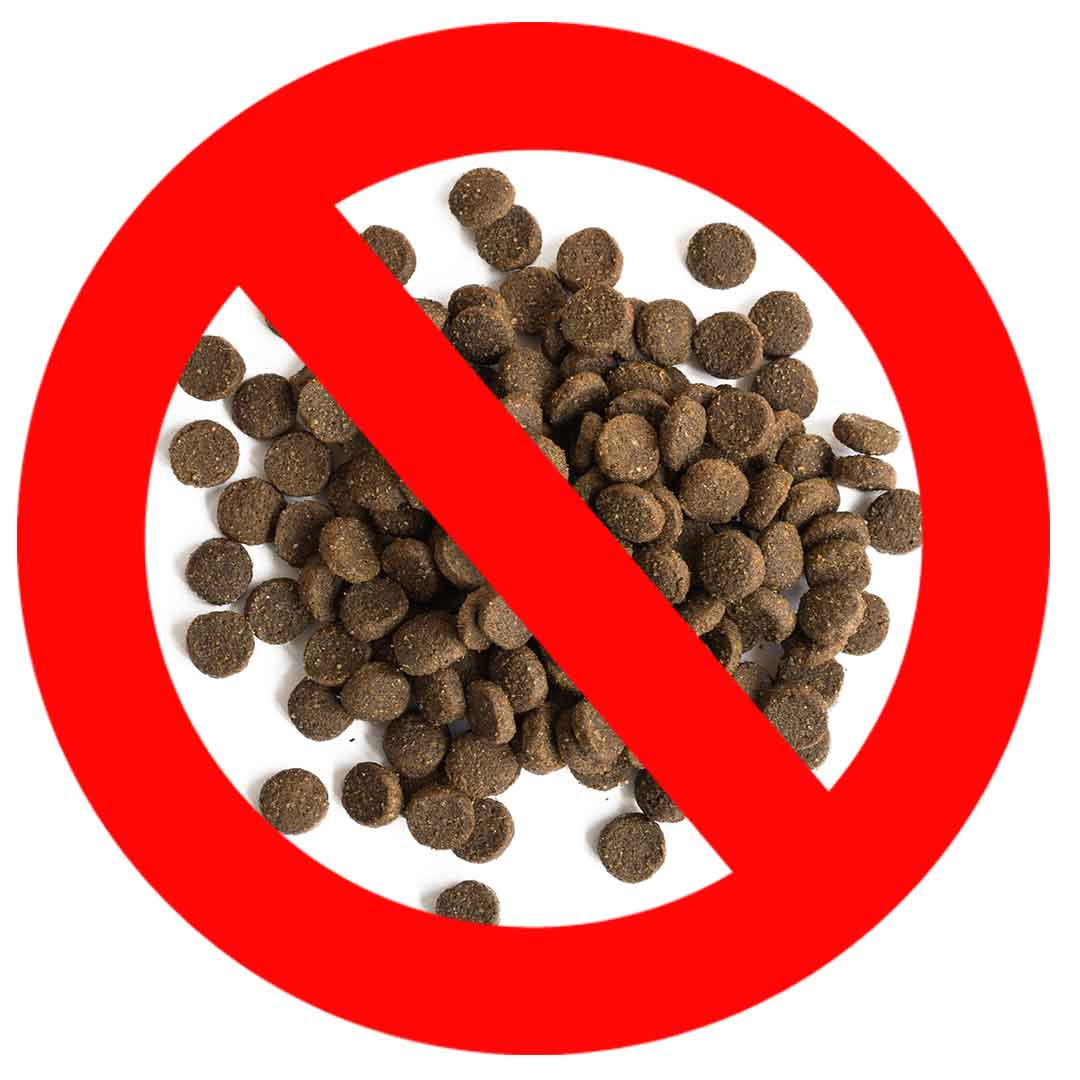 7 Shocking Facts About Processed Dog Food